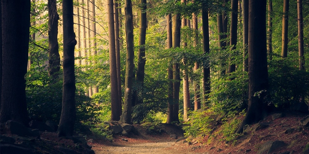 Nature Trails in Luxembourg